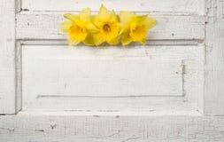 Daffodill su un portello dell'annata Fotografia Stock