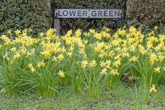 Daffodills della primavera Fotografia Stock