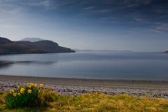 Daffodills por la escoba del lago en Escocia fotos de archivo libres de regalías