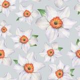 Daffodils - άνευ ραφής σχέδιο 4 Στοκ φωτογραφίες με δικαίωμα ελεύθερης χρήσης