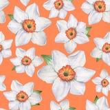 Daffodils - άνευ ραφής σχέδιο 5 Στοκ φωτογραφία με δικαίωμα ελεύθερης χρήσης
