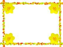 daffodils πλαίσιο λουλουδιών Στοκ Εικόνες