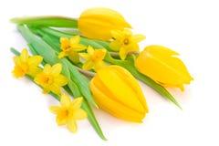 daffodils τουλίπες στοκ εικόνα