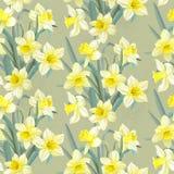 Daffodils безшовной винтажной картины сочные желтые Стоковое Изображение RF