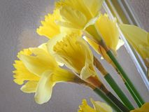 Daffodils весны на окне Стоковые Фото