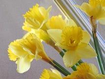 Daffodils весны на окне Стоковое Фото