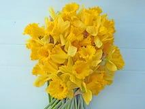 Daffodils весны Стоковая Фотография