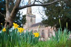 Daffodils в церковном дворе Стоковое Изображение