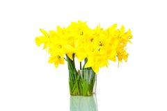 daffodils изолировали белизну Стоковые Фотографии RF
