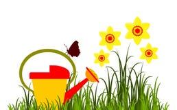 Daffodils и моча чонсервная банка Стоковая Фотография
