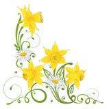 Daffodils, маргаритка, пасха Стоковая Фотография