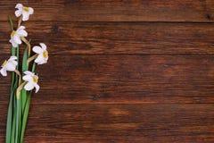 Daffodils на деревянной предпосылке, космосе экземпляра Стоковые Изображения RF