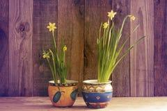 Daffodils на деревянной предпосылке сверху, космос экземпляра Стоковое Изображение