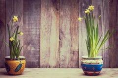 Daffodils на деревянной предпосылке сверху, космос экземпляра Стоковые Фото