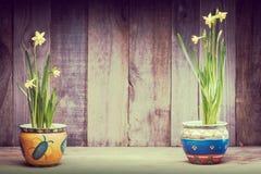 Daffodils на деревянной предпосылке сверху, космос экземпляра Стоковое Изображение RF