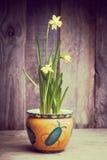 Daffodils на деревянной предпосылке сверху, космос экземпляра Стоковое фото RF