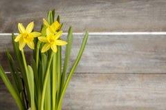 Daffodils на деревянной предпосылке Стоковое фото RF