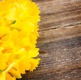 Daffodils на деревянной предпосылке Стоковая Фотография