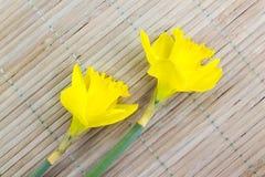 2 daffodils на деревянной предпосылке Стоковое Изображение