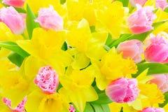 Букет тюльпанов и daffodils стоковые изображения