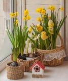 Daffodils украшения окна пасхи Стоковая Фотография