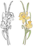 Daffodils. Hand-drawn in loose style with soft colors. Outlines and color on separate layers, global colors used for easy change Royalty Free Stock Photos