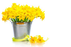 Daffodils Stock Photos