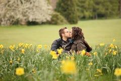 In daffodils Stock Photos