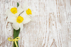 Free Daffodils Royalty Free Stock Images - 39895609