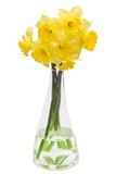 Daffodils. Bouquet in vase on white background stock image