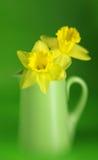 Daffodils Stock Photos