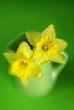 Daffodils Imagens de Stock Royalty Free