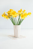 daffodils Fotos de Stock