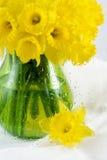Daffodils Fotografie Stock Libere da Diritti