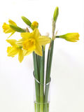 Daffodils. Vase of daffodils Royalty Free Stock Images