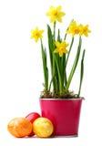 Daffodils amarelos Imagens de Stock Royalty Free