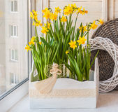 Daffodils in the balcony boxes decorated with angel Royalty Free Stock Photos