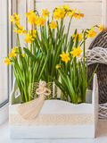 Daffodils in the balcony boxes decorated with angel Royalty Free Stock Images
