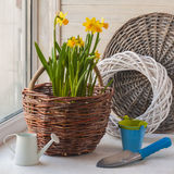 Daffodils in  basket and a decorative watering can Royalty Free Stock Photos