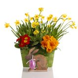 Daffodils in basket. Easter flowers in basket on wooden background stock images