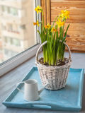 Daffodils in the basket on the window Royalty Free Stock Photos