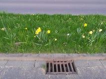 Daffodils bedides droga Zdjęcia Stock