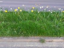 Daffodils bedides droga Obrazy Royalty Free