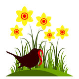 Daffodils and bird Stock Images
