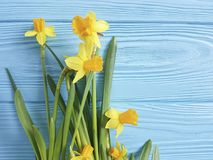 Daffodils beautiful invitation spring on a blue wooden wedding background romantic. Daffodils on a blue wooden background anniversary beautiful romantic rustic Stock Photo