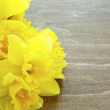 Daffodils on the boards Royalty Free Stock Photography
