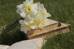Daffodils and a book on the grass Stock Images