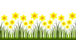 Daffodils border Stock Image