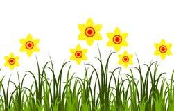 Daffodils border Stock Photos
