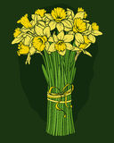 Daffodils. Bouquet of daffodils. Vector image. Vertical Stock Photos